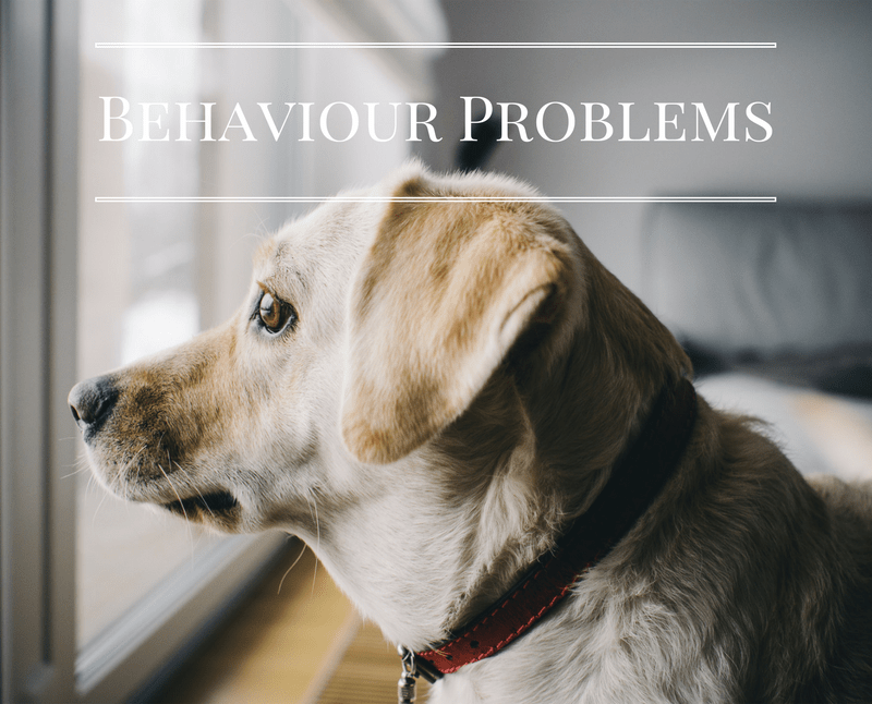 behaviour problems