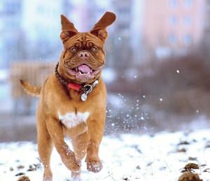 dog recall training