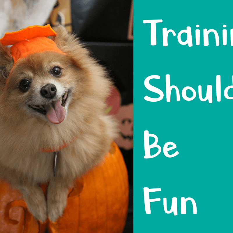 Training Is Supposed To Be Fun – Dog Training Tips.