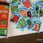 Start Your Garden with 5 Simple Dollar Tree Essentials