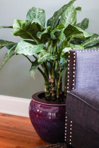 how to take care of houseplants