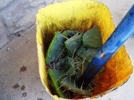 chopped cactus