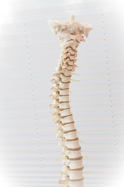 the basics of dealing with back discomfort - The Basics Of Dealing With Back Discomfort