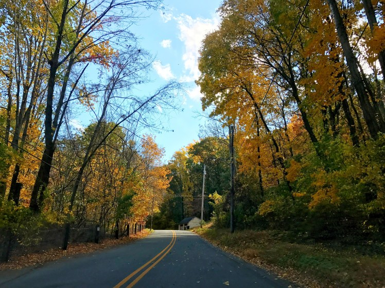 6 Things You Have To Do This Fall - foilage