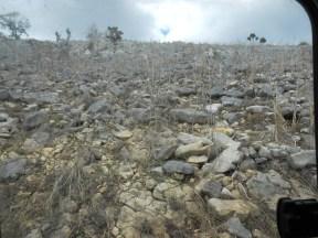 La déforestation, conséquence de la pauvreté en milieu rural