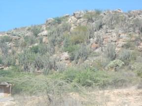 Seuls des bayarondes mal nourris (épineux qui servent à la fabrication du charbon de bois) et des cactus poussent là.