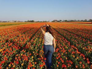 Imperdible: ruta en bicicleta por los campos de tulipanes en Holanda