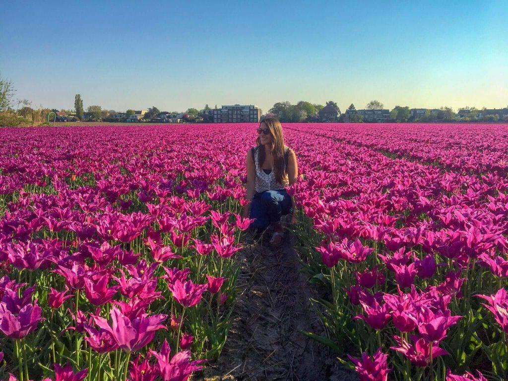 tulipanes holanda
