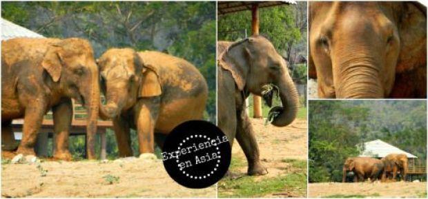 elefantes excursion