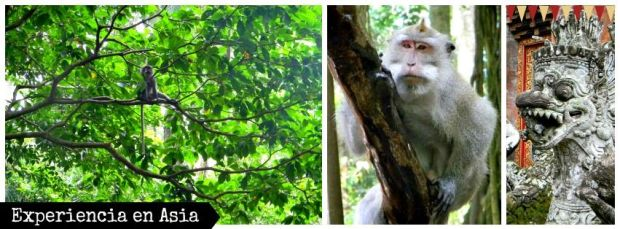 Sacred Monkey Forest Sanctuary (2)
