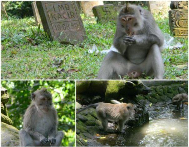 bosque de monos ubud 2