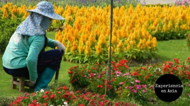 flores asia