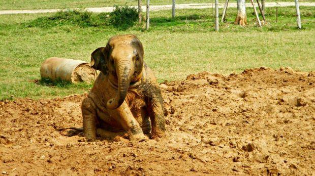 1 disfruta los elefantes