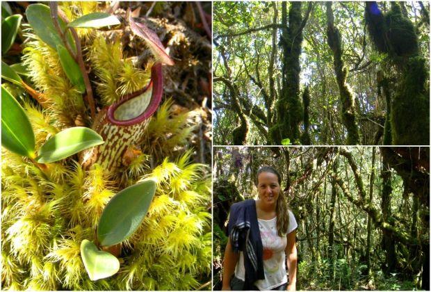 bosque musgoso Cameron Highlands