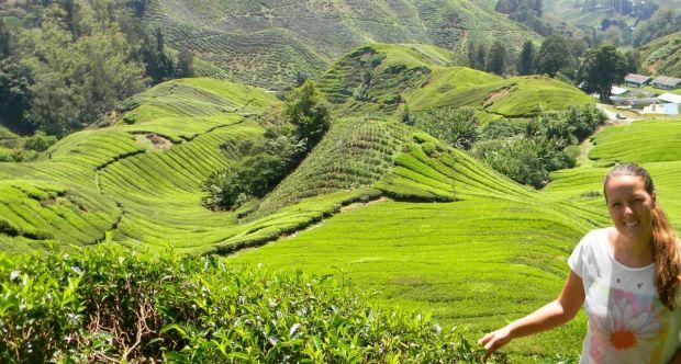 Plantaciones de te Malasia