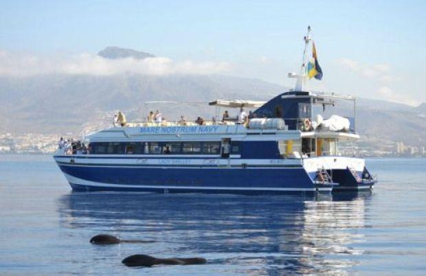 tenerife excursión delfines