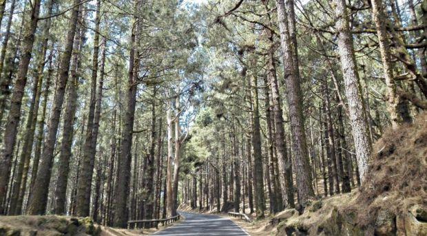 Parque Natural de la Corona Forestal Tenerife