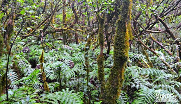 bosque laurisilva tenerife