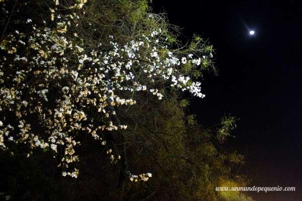 arbol y luna cerro san cristobal
