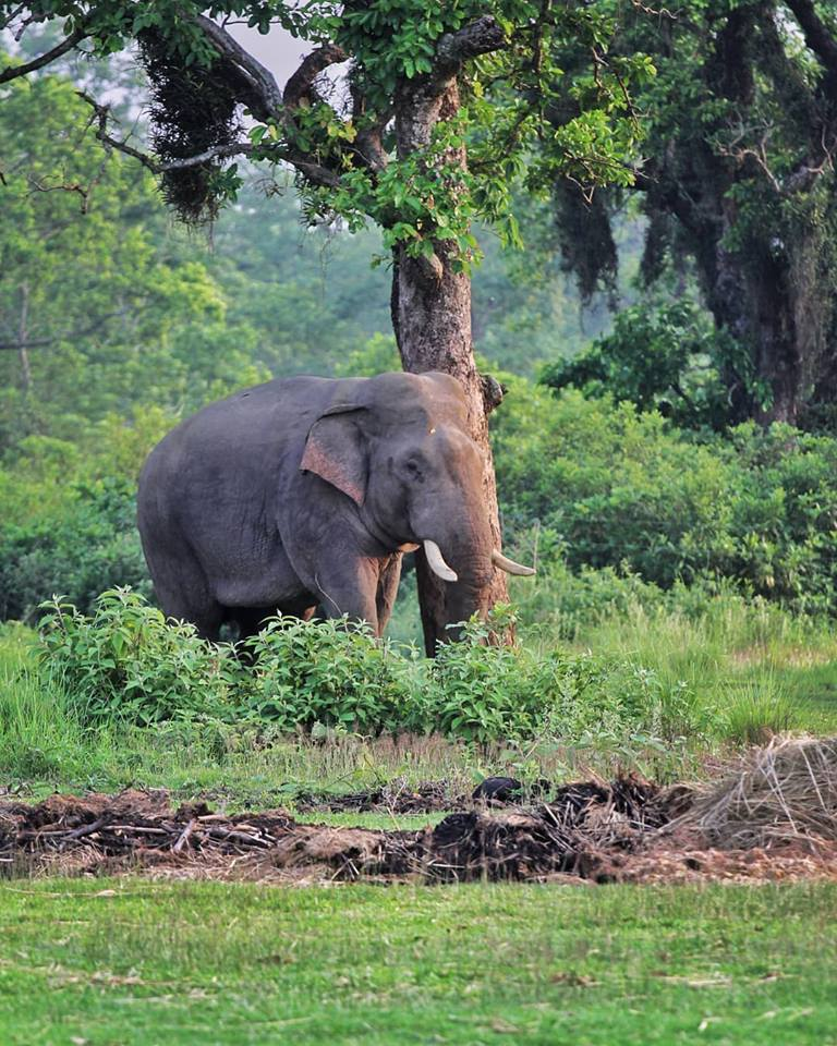 Things to do in sauraha