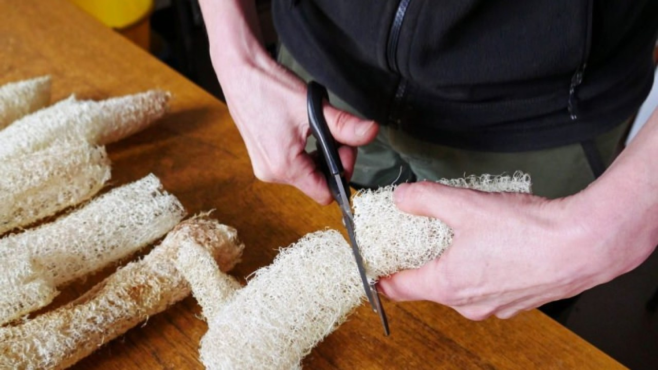 Cultiva tus propias esponjas vegetales en lugar de usar esponjas de plástico