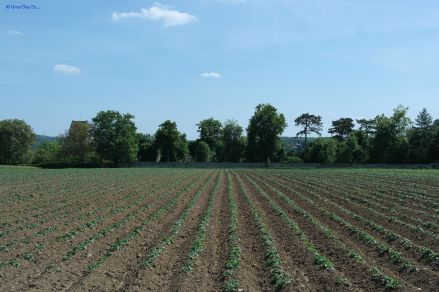 The fields now day