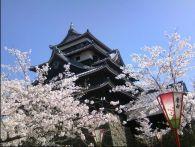 島根 桜のトンネルならココ!見頃&穴場スポット2015