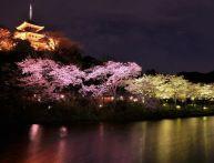 神奈川の桜の名所&穴場はどこ?デートでいくならどこがオススメ?