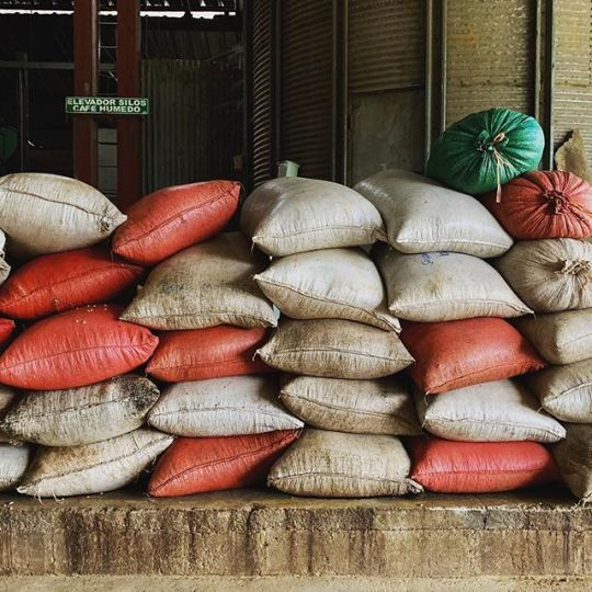 San Vicente green coffee bags stacked