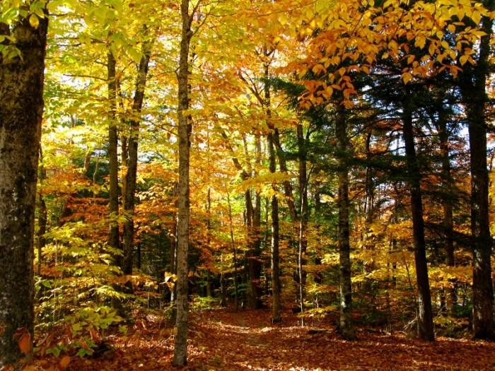 Fall colours Maine
