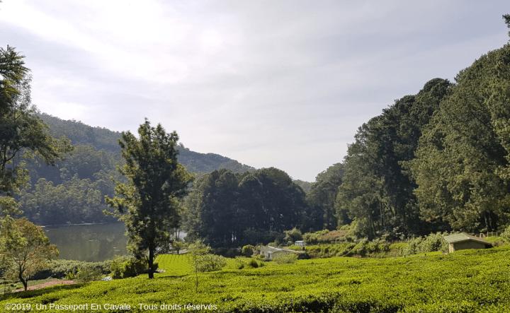 ©2019_Un_Passeport_En_Cavale_Sri_Lanka_Tous_droits_réservés_000001