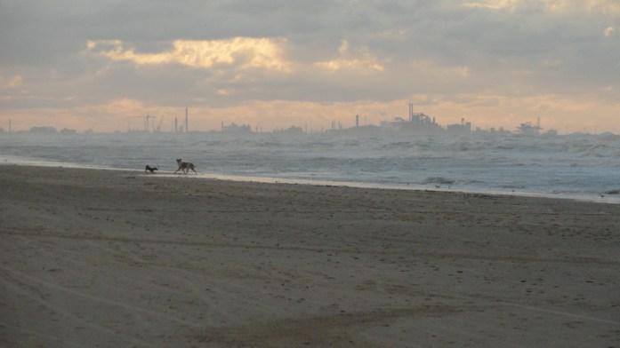 Plage de Bray-Dunes - Le port de Dunkerque au loin
