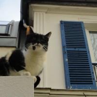 Balade dans le bas des Buttes Chaumont, Sainte Marthe // Butte Bergeyre // Rue de la Villette