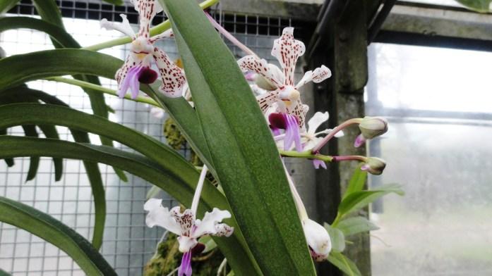 Jardin des Serres d'Auteuil, Paris 16e - Serres Chaudes, orchidées