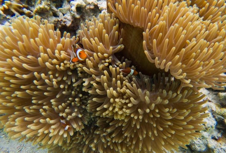 Kanawa Island - Nemo
