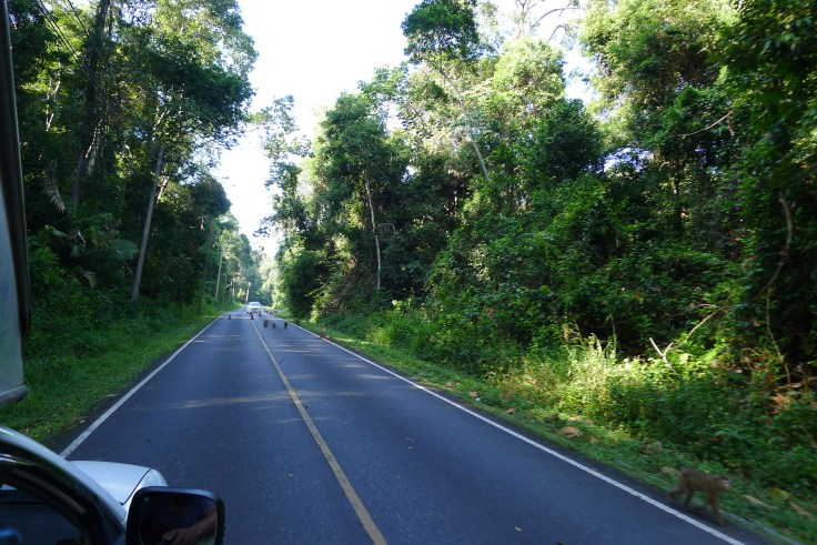 Khao Yai monkeys on the road
