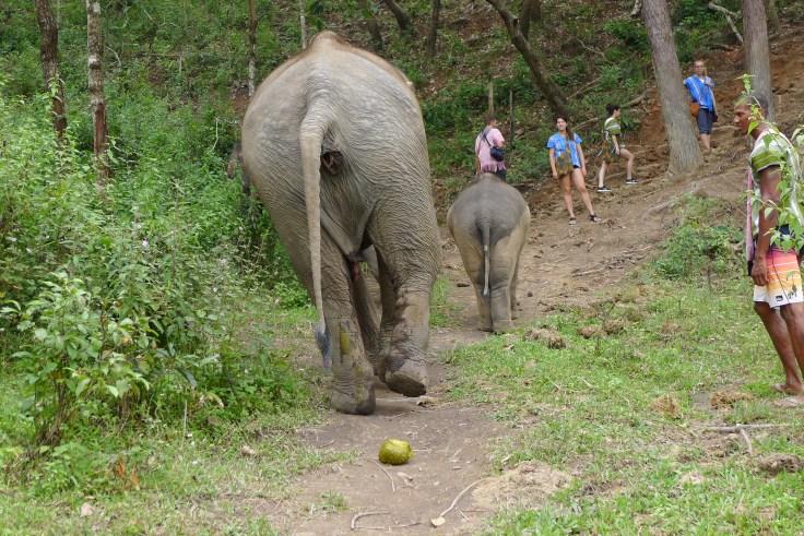 Elephant Rescue National Park Chiang Mai