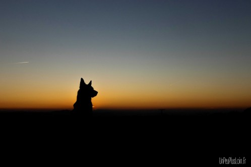 Milford téquila sunrise