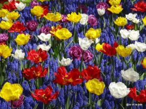 Mosaïque tulipes Keukenhof