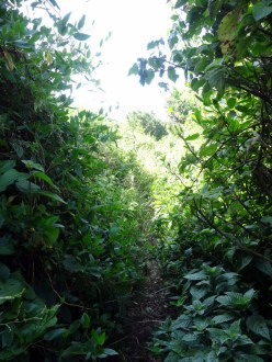 passage-foret-ngong-hills