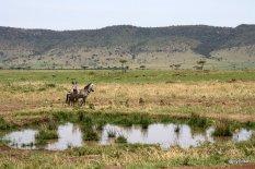 plan-deau-au-masai-mara