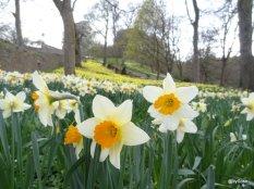 Seaton-Park-Springtime
