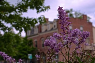 Red Brick and Purple Petals