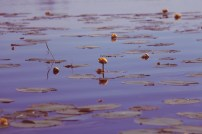 Relections & Flowers II