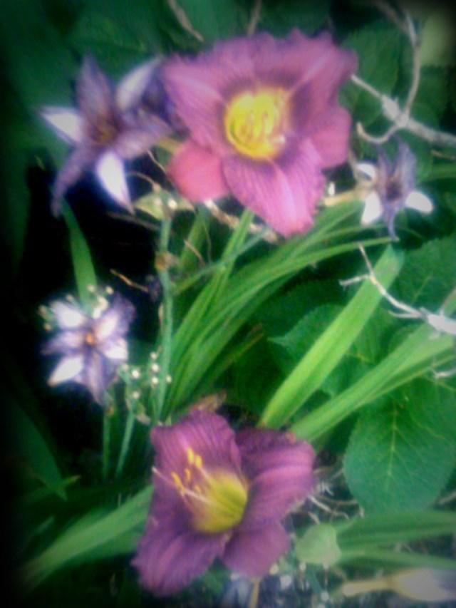 summer-flowers-nj-71611_5942959644_o