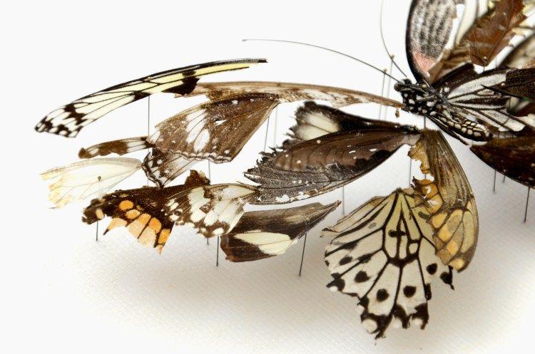 Anne-Ten-Donkelaar-Broken-Butterflies-4