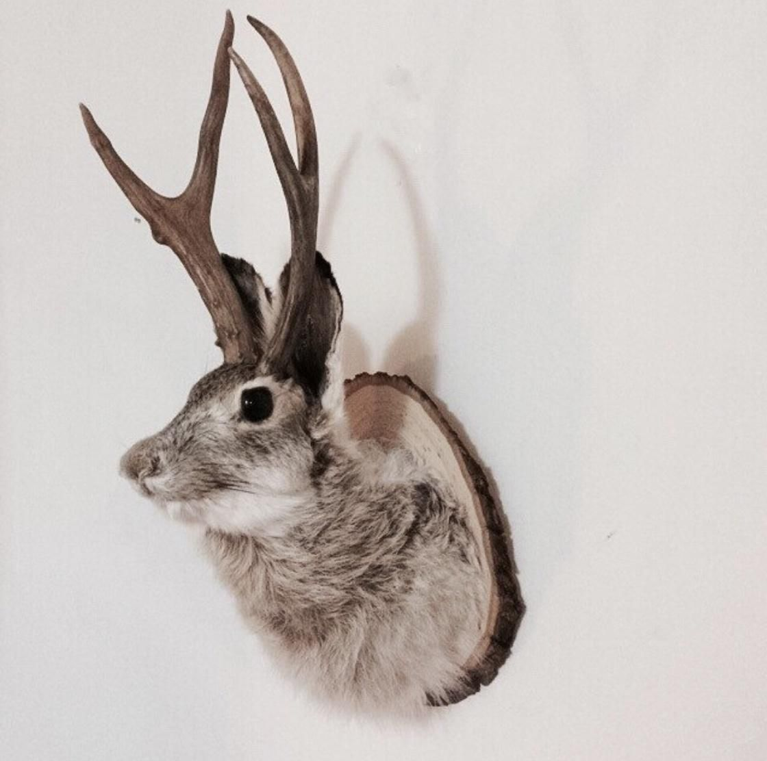 Taxidermy Jackalope courtesy of Brooklyn Taxidermy Etsy