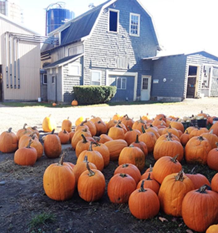 farm.pumpkins.2013.sm_