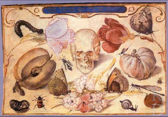 Jacob Hoefnagel: Vanitas (still life with skull, fruits, flowers, and insects) 1593