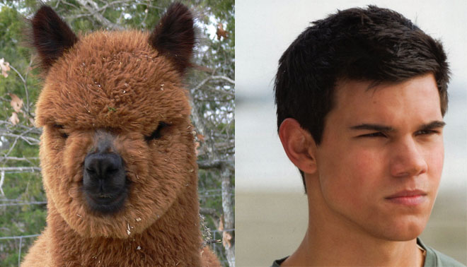 Jacob Llama